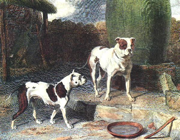 Shinobi Dog Breed