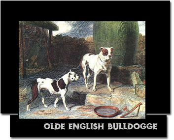The History of the Olde English Bulldogge